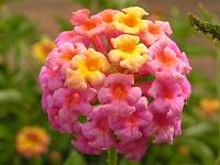 Flowers of Ecuador