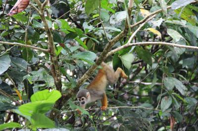 Ecuador's Amazon