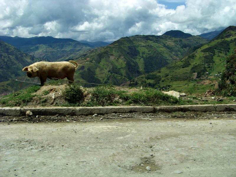 Beautiful Ecuador