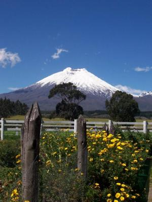 Cotopaxi and Flowers