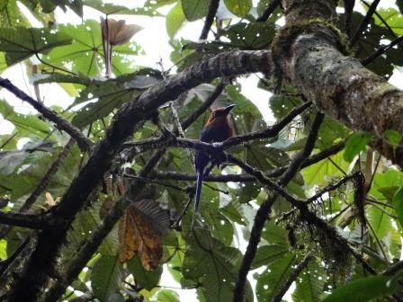 Bird watching in Mindo