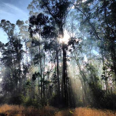 Misty Morning in El Parque Metropolitano