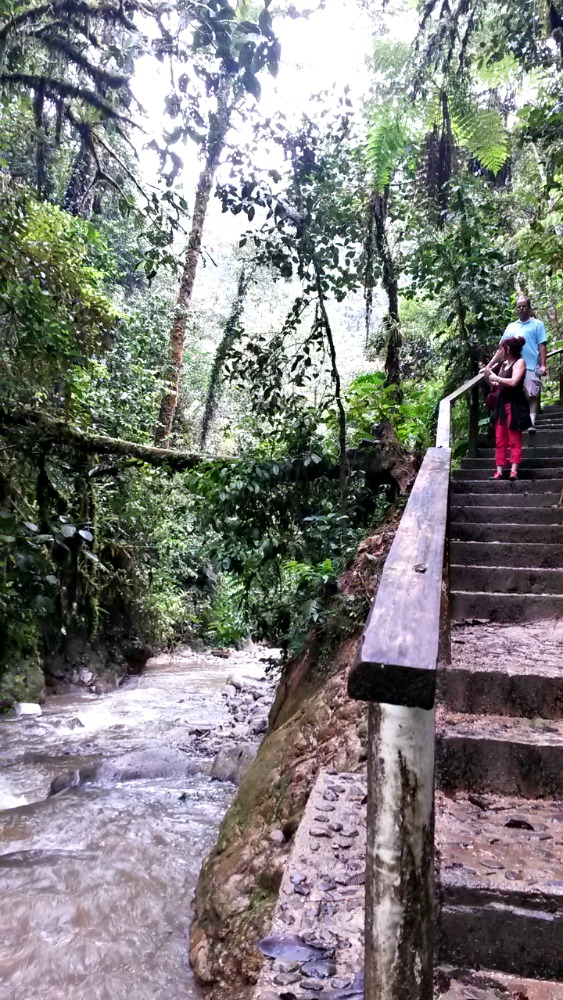 Podocarpus National Park - Hiking Stairs